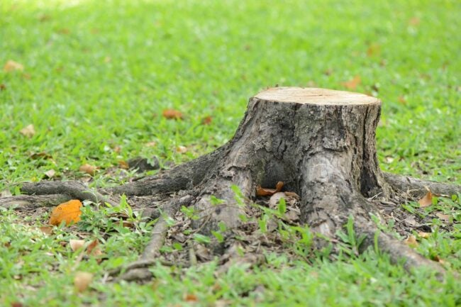 Tree Stump Removal Cost How to Save Money