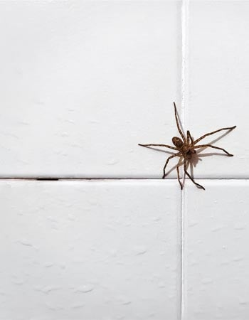 What Attracts Spiders Cracks