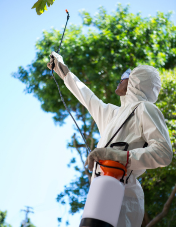 What Is the Best Way to Prevent Pest Infestation?