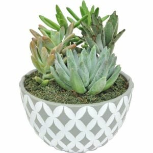 The Best Hostess Gifts Option: Costa Farms Succulents