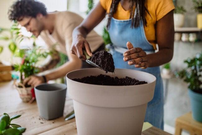 pothos plant care soil