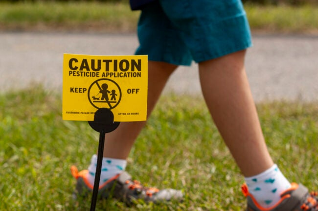 Clarksburg, MD, USA 09/12/2020: A yellow yard sign warning kids and pets of the recent pesticide spraying and advices them to stay away. A kid is playing regardless. Pesticide use is a big concern.