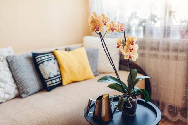orchid care for more blooms