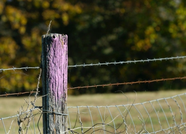 purple fence meaning