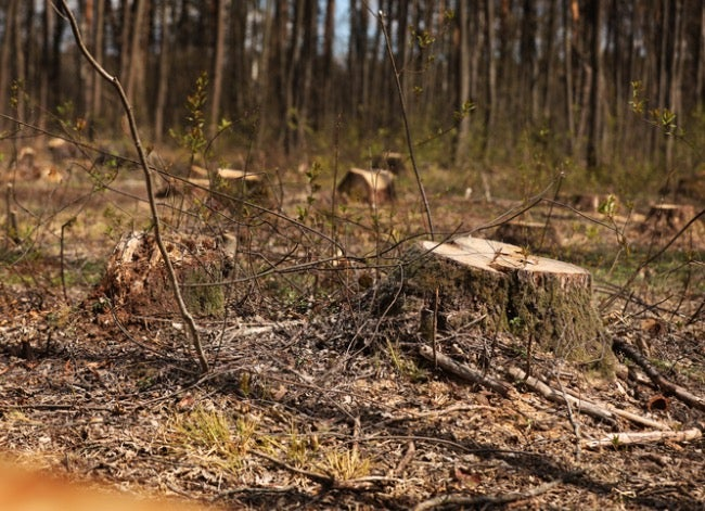 How to Protect Your Property From Wildfires dead brush