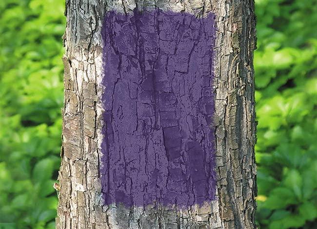 purple fence meaning purple paint on tree