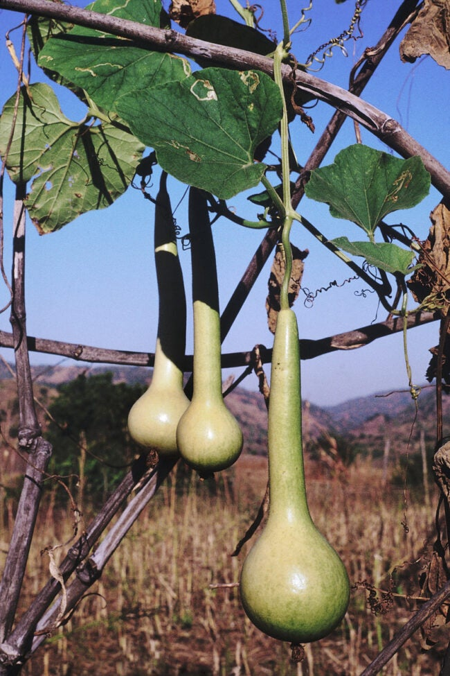 types of gourds