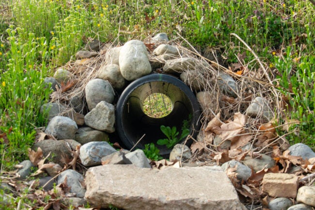 French Drain Cost