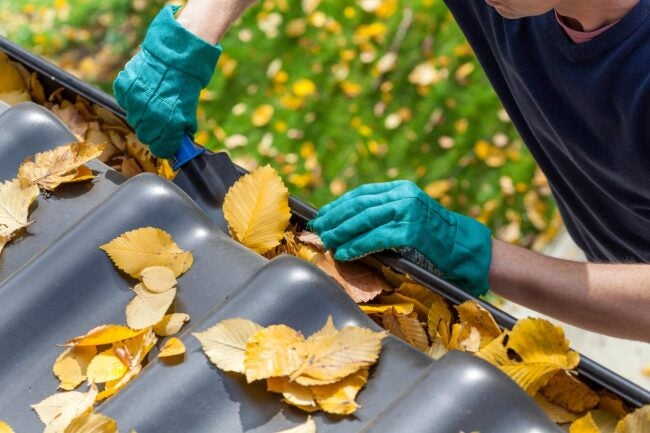 Gutter Cleaning Cost How to Save Money
