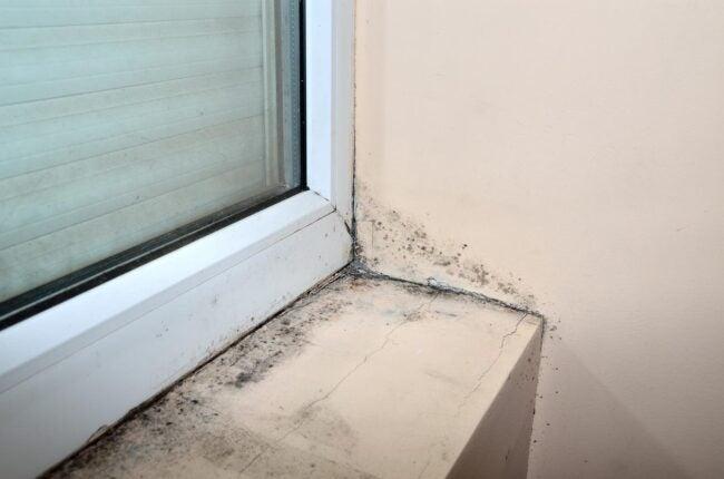 Mold on the Window Sill