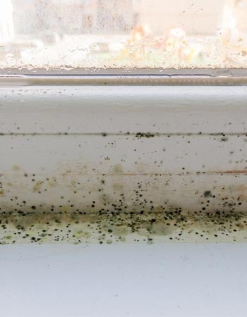 Mold on the Window Sill Check the Window Frames