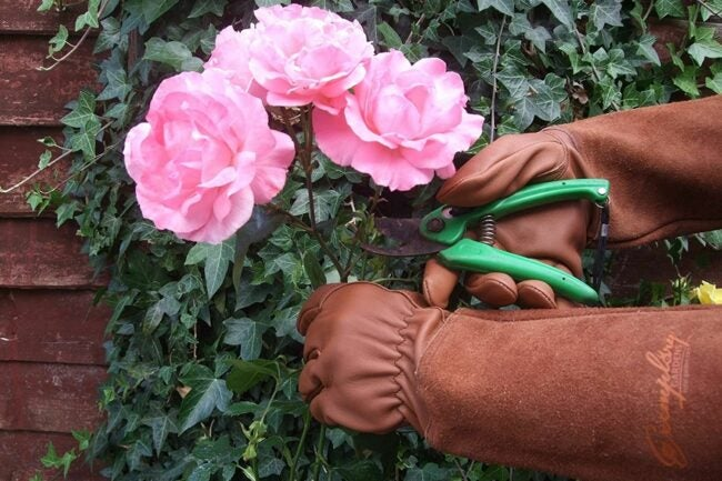 The Gifts for Gardeners Option