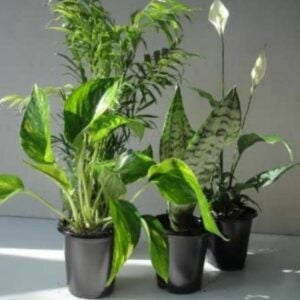 The Best Gifts for Plant Lovers Option: Emeritus Gardens Plants Four Best Clean Air Plants