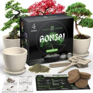 The Best Gifts for Plant Lovers Option: HOME GROWN Bonsai Tree Kit