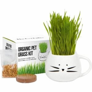 The Best Gifts for Plant Lovers Option: The Cat Lady's Store Organic Cat Grass Growing Kit