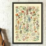 The Best Gifts for Plant Lovers Option: Vintage Flower Print 1909 Adolphe Millot Poster