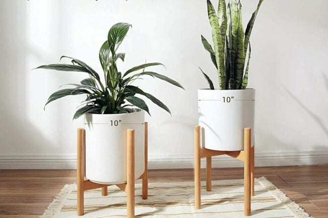 The Best Gifts for Plant Lovers Option