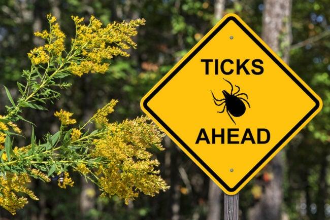when is tick season