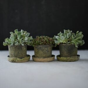 The Gifts for Gardeners Option: Earth Fired Clay Low Sill Pot + Saucer, Set of 3