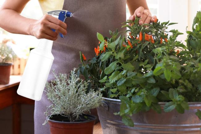 Best Plant Misters