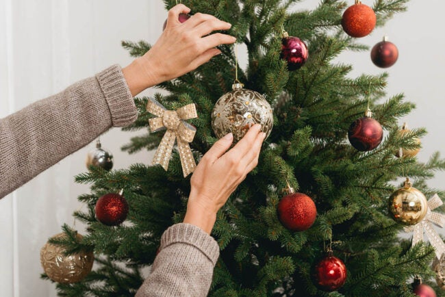 The Best Places to Buy Christmas Trees Options