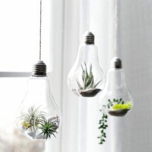 The Best Etsy Gifts Option: 3 Hanging Terrarium Bulbs