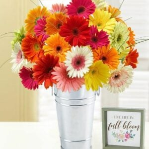 The Best Gifts for New Homeowners Option: Happy Gerbera Daisies, 12-24 Stems
