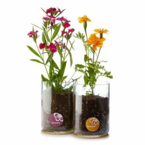 The Best Personalized Gifts Option: Birth Month Flower Grow Kit