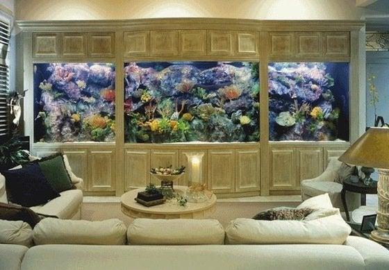 Home Improvements to Avoid - Aquarium