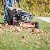 Why Mowing Leaves Is Better Than Raking Them