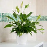 12 Plants You Can Grow Successfully in the Shower
