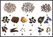 Pest poop identification chart differences