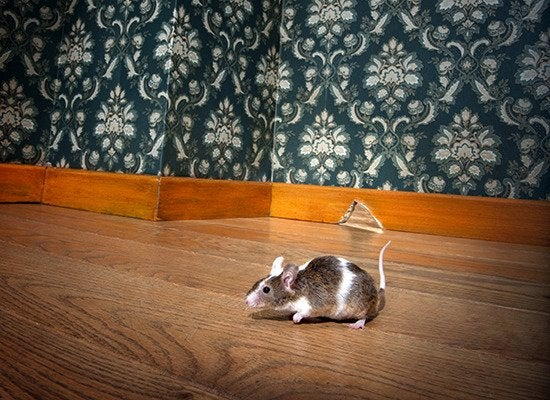 11 Ways to Get Rid of Mice