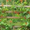 Use Zip Ties in the Garden