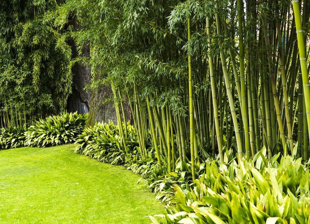 The 15 Best Plants To Grow For Backyard Privacy Bob Vila