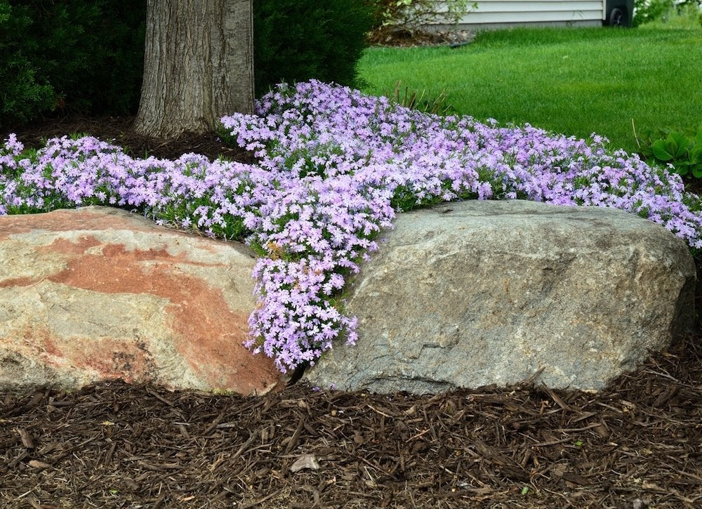 Low Maintenance Ground Covers The Best, Ground Cover Flowering Plants