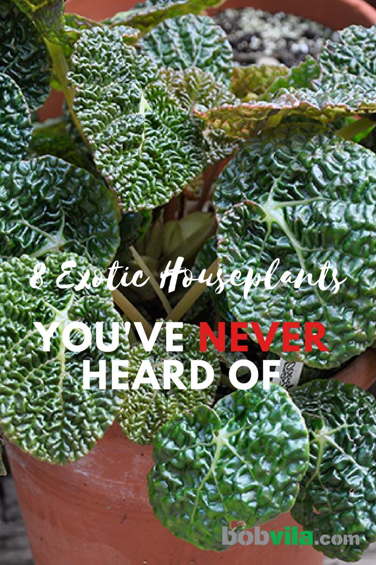 8 Exotic Houseplants You Ve Never Heard Of Bob Vila