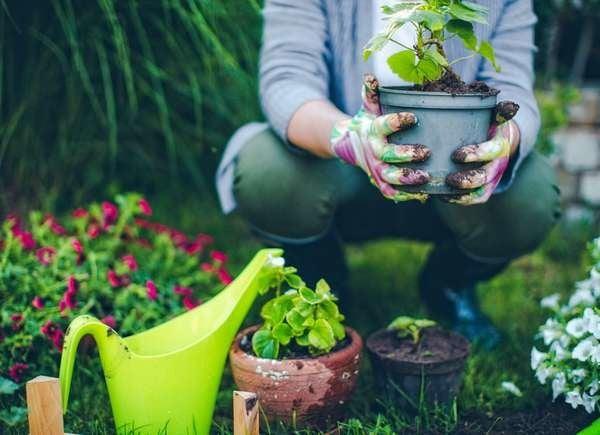 How To Make Plants Grow Faster - 10 Secret Ingredients for Your Garden -  Bob Vila
