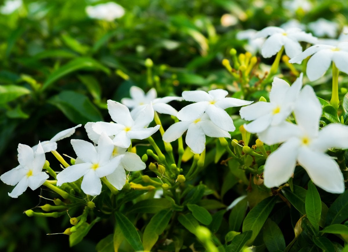 The 15 Best Plants For Your Bedroom And Why Bob Vila
