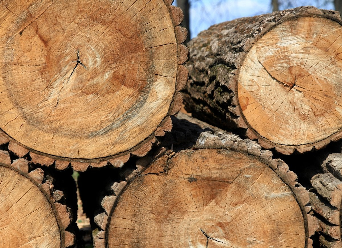 Tree Ring Crafts 10 Things To Do With Cross Cut Trees Bob Vila