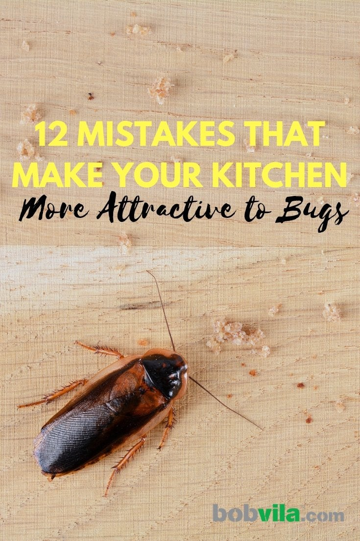 Bugs In Kitchen 12 Mistakes You Re Making Bob Vila