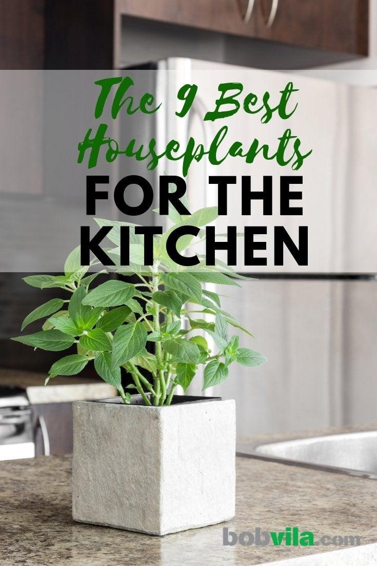 Best Plants For The Kitchen Bob Vila