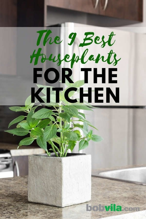 Plant Your Greens