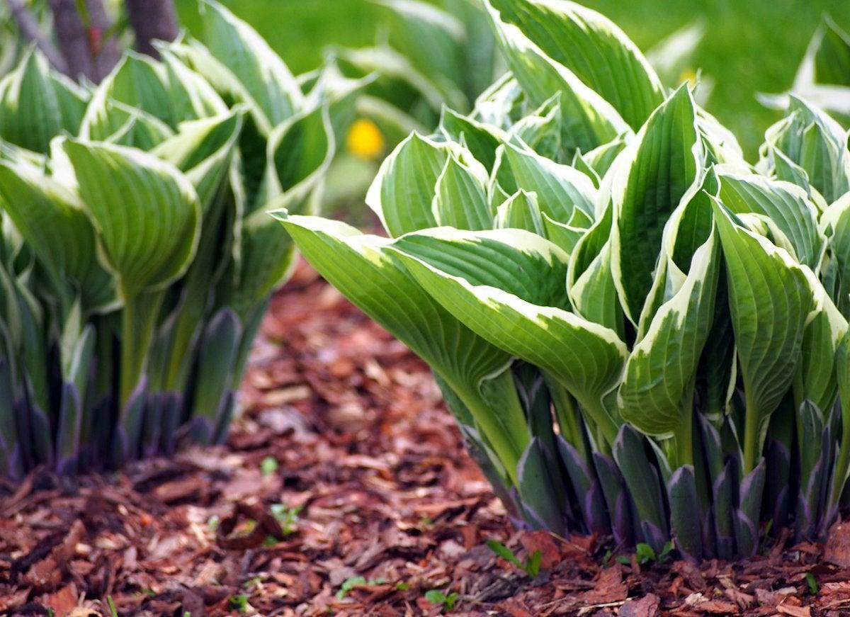 Shade Plants 20 Plants That Don T Need Sun Bob Vila
