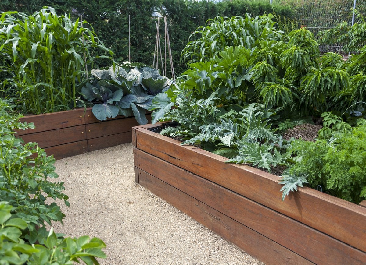 10 Tips for Planning a Raised Garden Bed