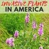 invasive plants in america