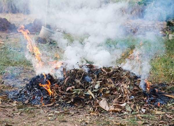 No quemes hojas