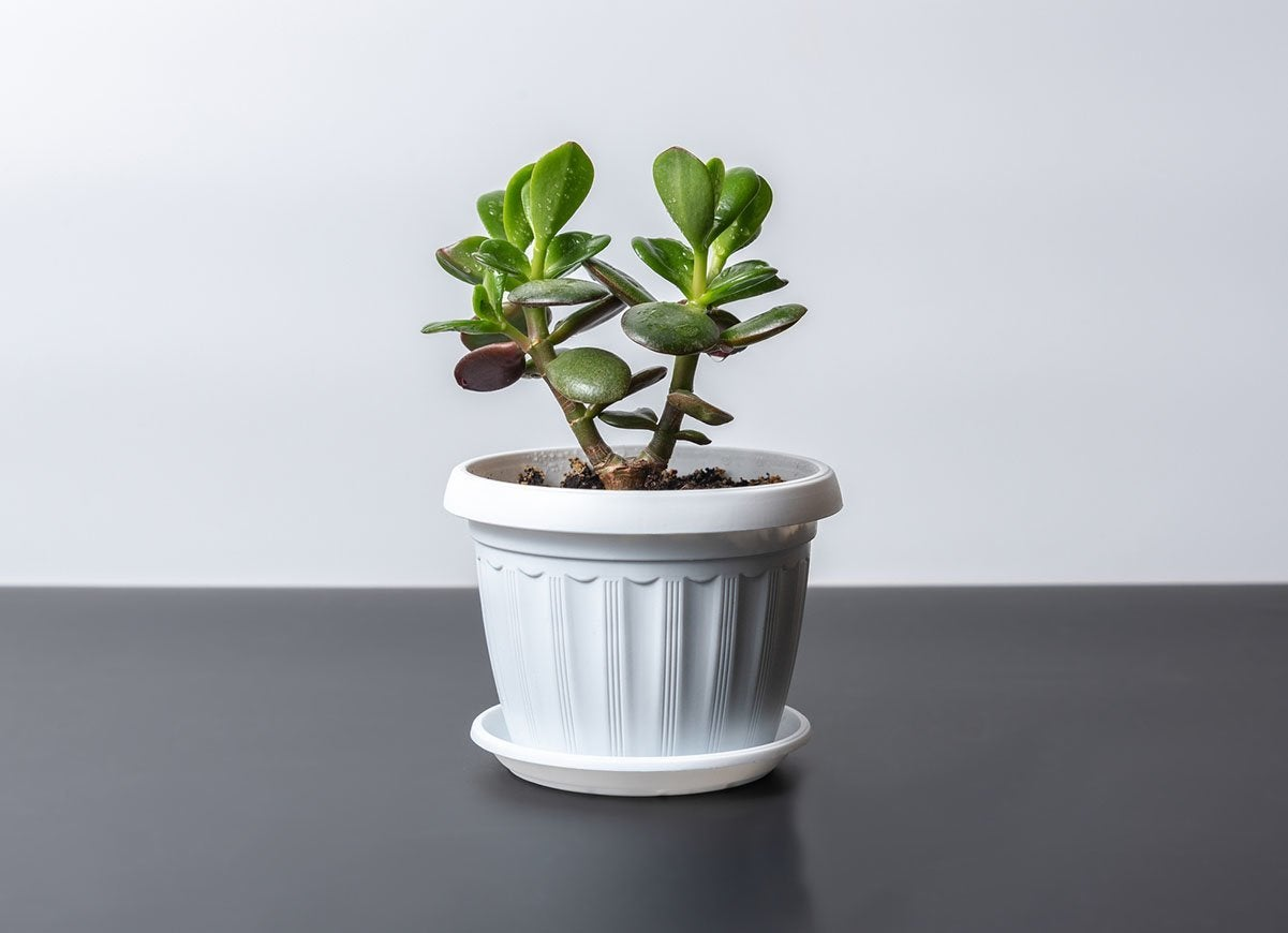 25 Indoor Houseplants That Add Easy Color To Your Home Bob Vila