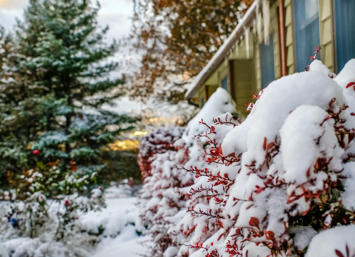 Winter Gardening 10 Plants That Look Great Year Round Bob Vila