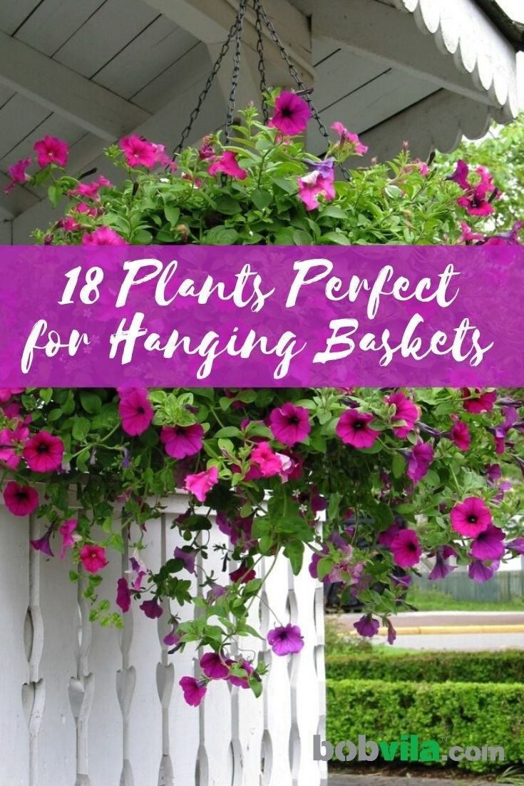 18 Best Hanging Plants For Indoors And, Outdoor Hanging Baskets For Plants